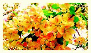 çiçeklerr